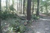 """Ustalono """"sprawców"""" zniszczenia drzewa w Parku Wolności"""